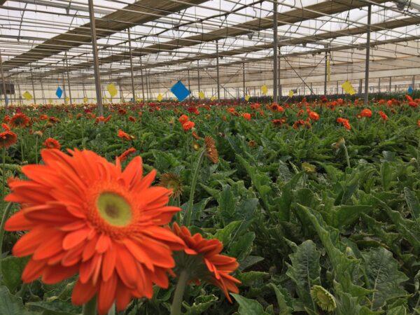 Invernadero de flores