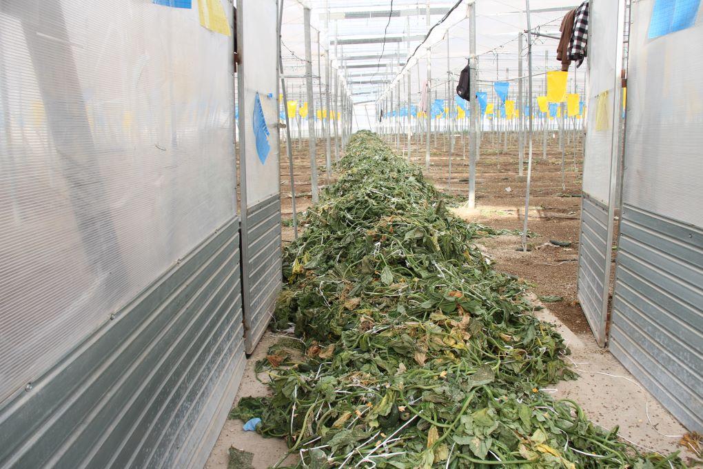 residuos agrícolas
