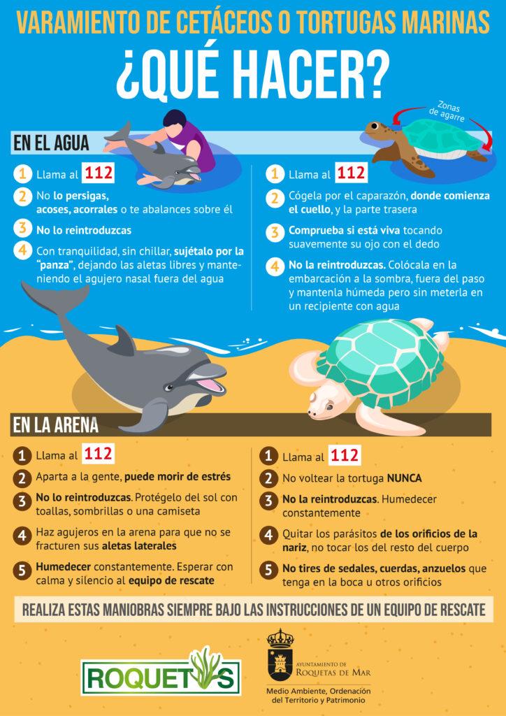 tortugas y delfines varados vertical_Mesa de trabajo 1