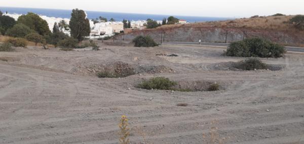 Árboles enterrados en Mojácar