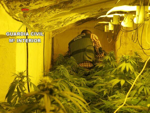 Marihuana encontrada en una operación en Albox.