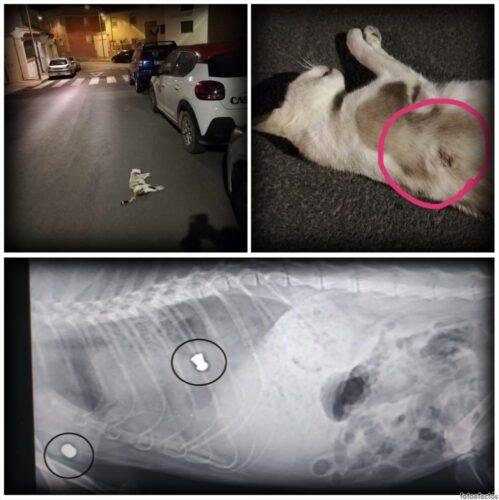 Uno de los gatos afectados, de Huércal de Almería.