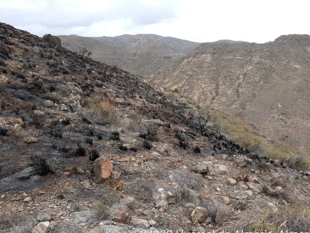 Imagen del incendio forestal de Gádor distribuida por el Infoca