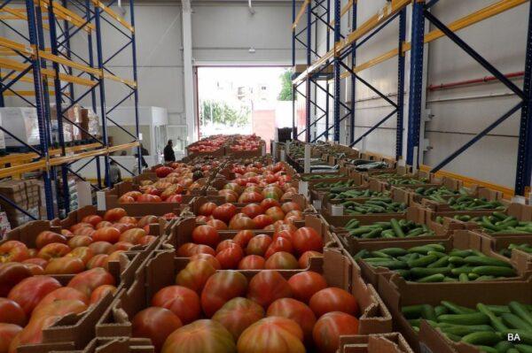 Cajas tomate y pepino preparadas para su distribución