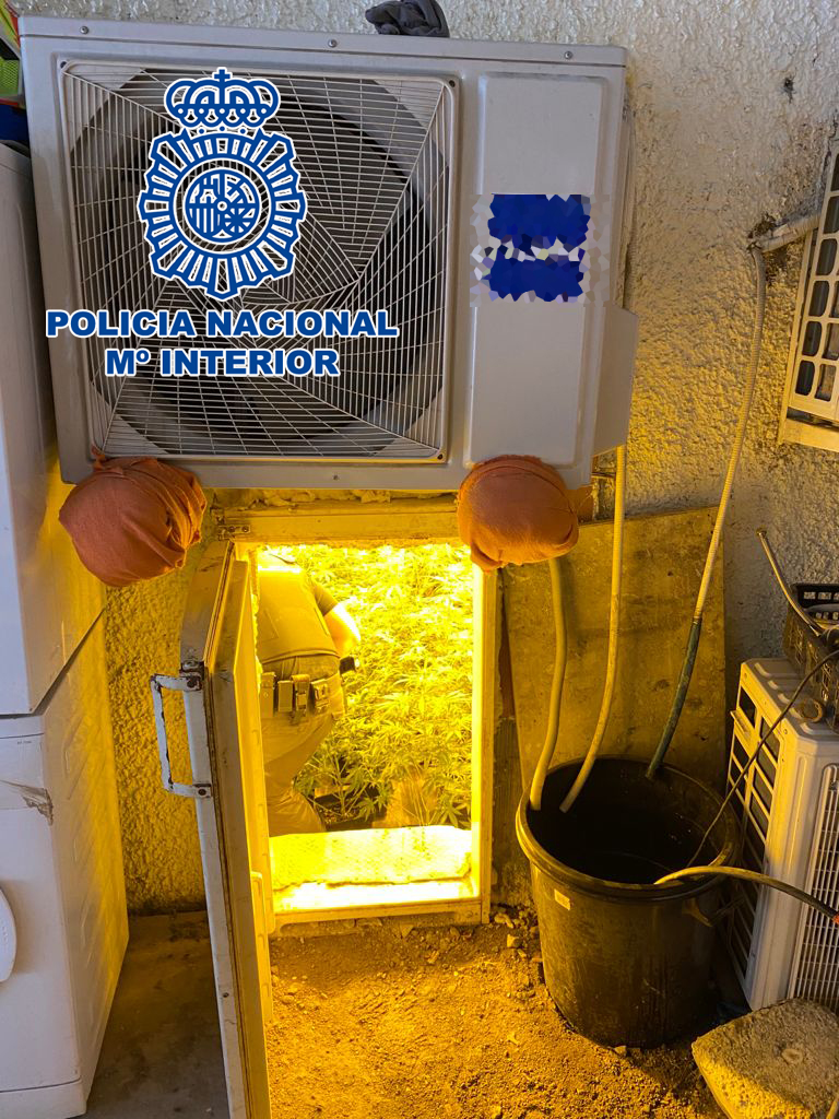 Marihuana en un frigorífico.
