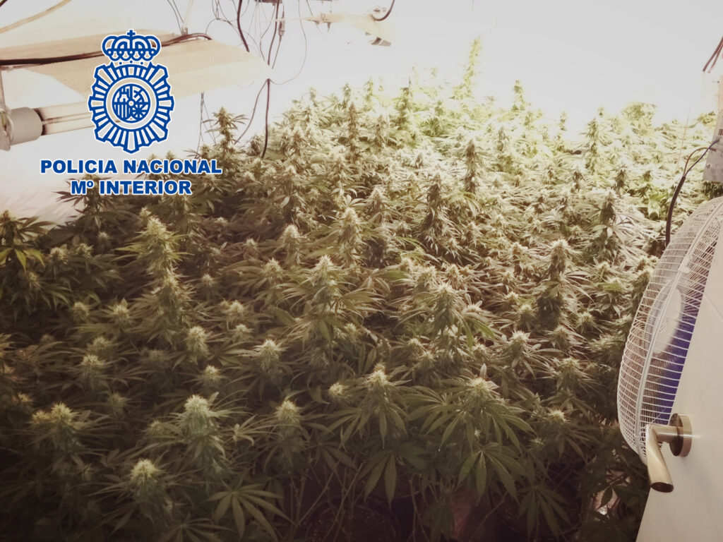 Marihuana en El Ejido.