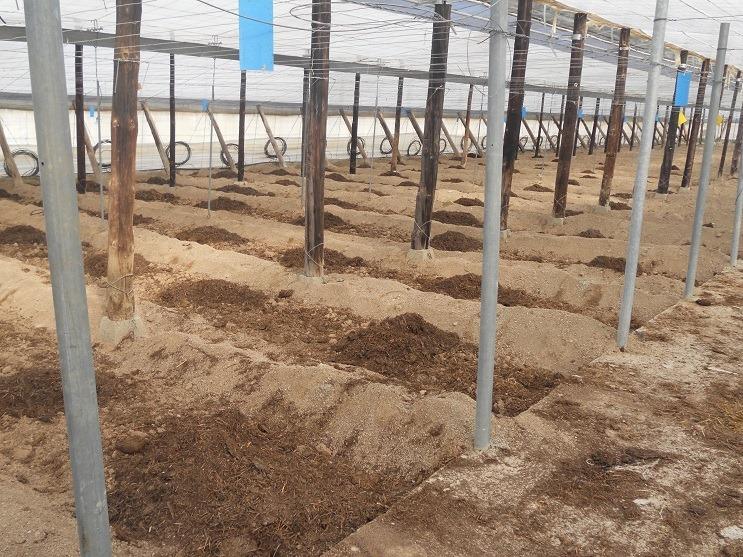 Invernadero sin plantación