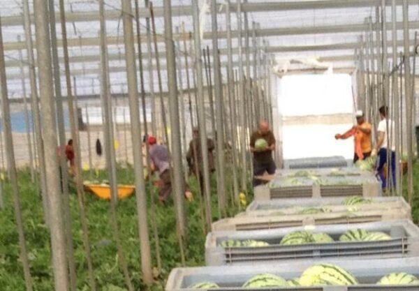Agricultores en el invernadero