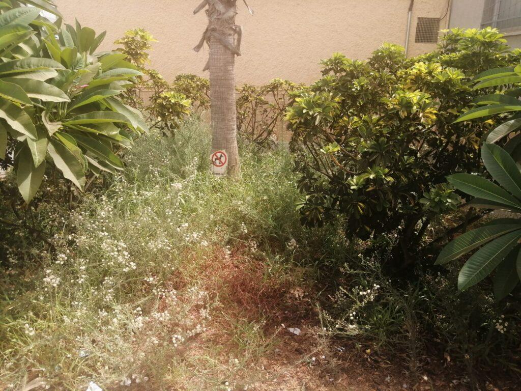 Jardín de Roquetas