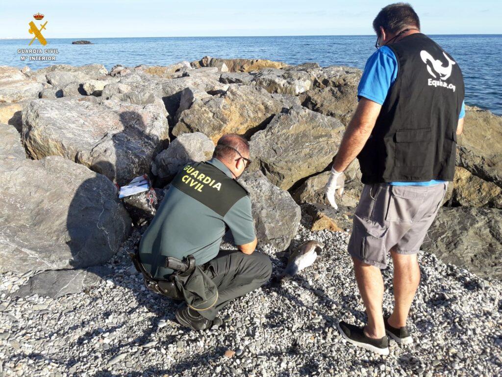 Varamiento de delfín en Adra.